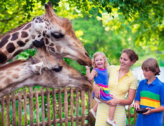 Safari West Attraction of Calistoga